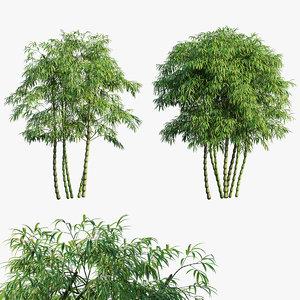 3D bambusa ventricosa 03