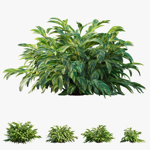 variegated ginger plant trees 3D