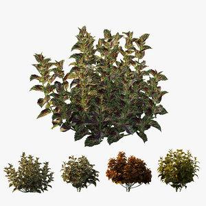 3D coleus plant tree