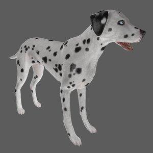 dog dalmatian animal 3D model