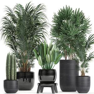 plants black flowerpots tropical 3D