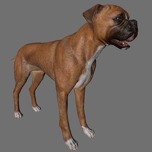 3D dog boxer animal