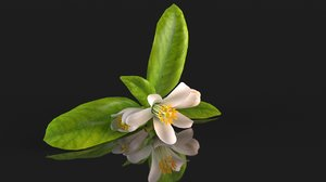 orange citrus flower 3D model