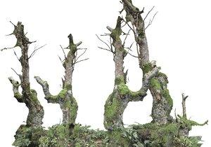forest asset hd 3D model