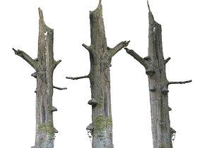 3D forest asset hd model
