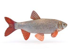 freshwater fish model