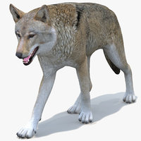 Red Wolf Animated