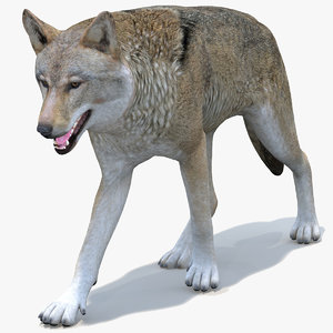 wolf animal red 3D model