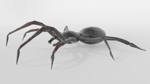 spider insect nature 3D model