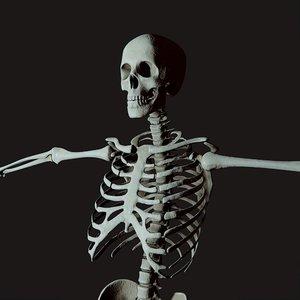 3D medical skelegon model