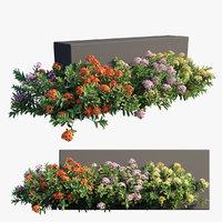 Ixora plant set 18