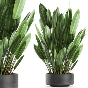 3D decorative interior strelitzia