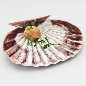 shell scallop model