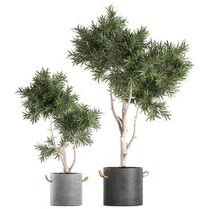 3D decorative tree black flowerpot