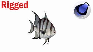 spade fish atlantic 3D model