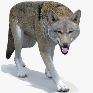 wolf rigged red 3D model