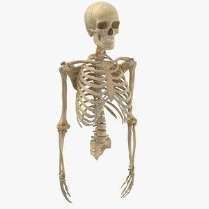 real human rib cage 3D