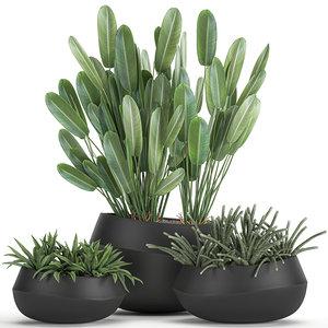 3D plants interior houseplants model