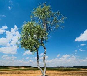broadleaf tree 004 3D model