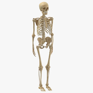 real human woman skeleton bones model