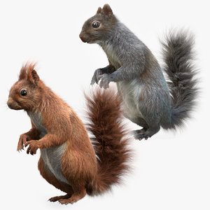 squirrel rodent animal 3D model