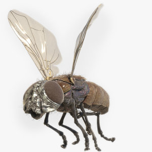 3D model housefly animation