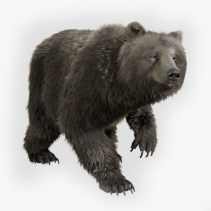 3D bear standard pack rig character model