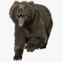 bear FUR RIGGED ANIMATED