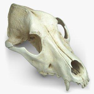 skull pbr v-ray 3D model
