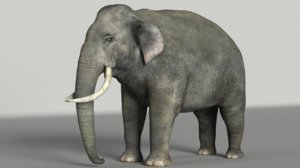 3D elephant mammal animal