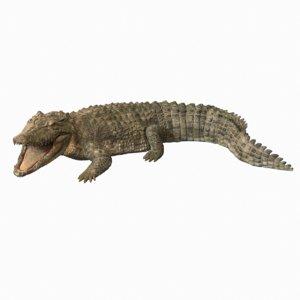 3D rigged animation crocodile model