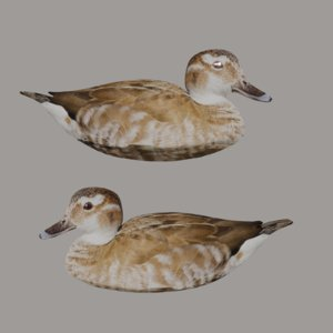 3D ready mallard duck model