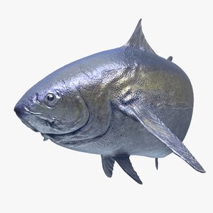 tuna rigged 3D