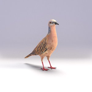 spotted dove model
