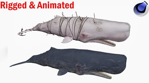 sperm whale 3D model