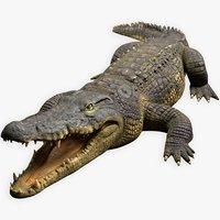 High Quality Rigged Crocodile