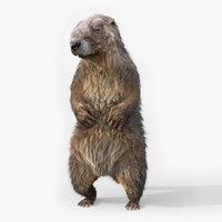 marmot RIGGEDFUR