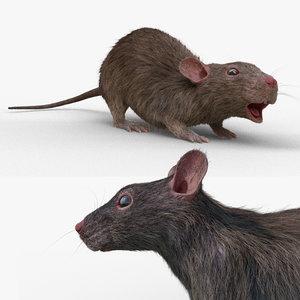 rat rig 3D model