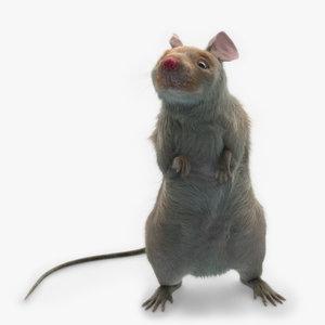 mouse fur rig model