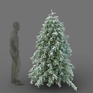 3D model young spruce tree seasons