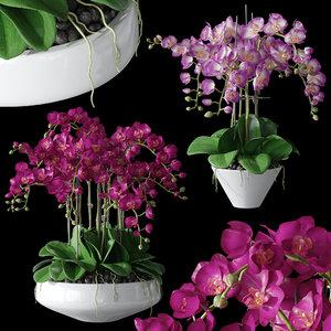 3D model set orchid