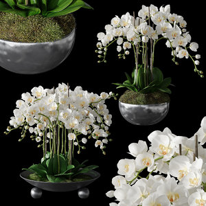 3D set orchid 1 model