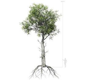 broadleaf tree 005 3D