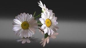 chamomile daisy flower model