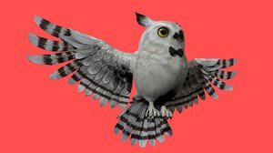 barn owl bird rigged 3D model