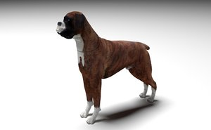 3D model boxer dog