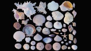 3D ground shells model