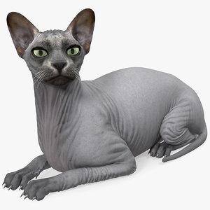 3D sphynx cat black lying