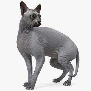 sphynx cat black 3D model