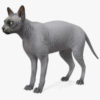 Sphynx Cat Solid Color Black